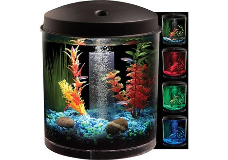 Dealdash hawkeye 2 gallon 360 starter aquarium kit with for Oily fish representative species